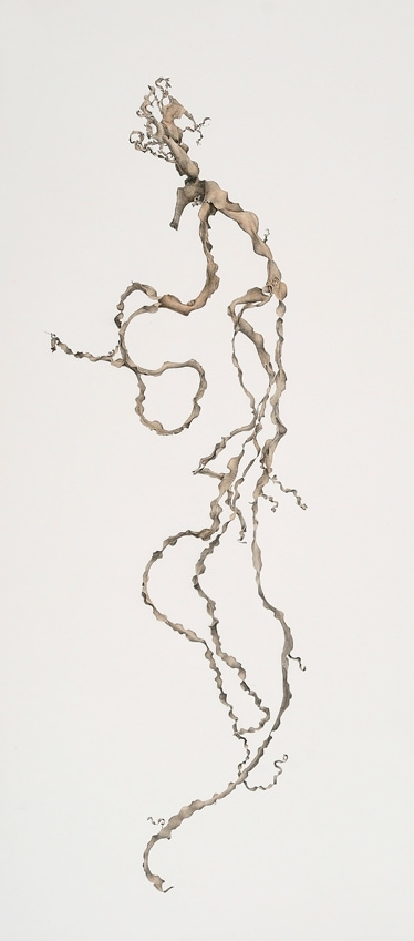 Andrew Seward, Seaweed 3, 2009, pencil