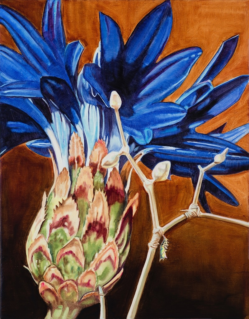 Dena Kahan, Cornflower, fly and chrysalis