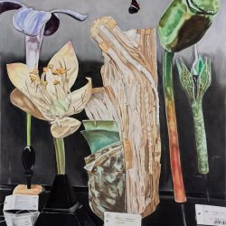 Dena Kahan, Still Life With Wood, Butterfly And Ladybird