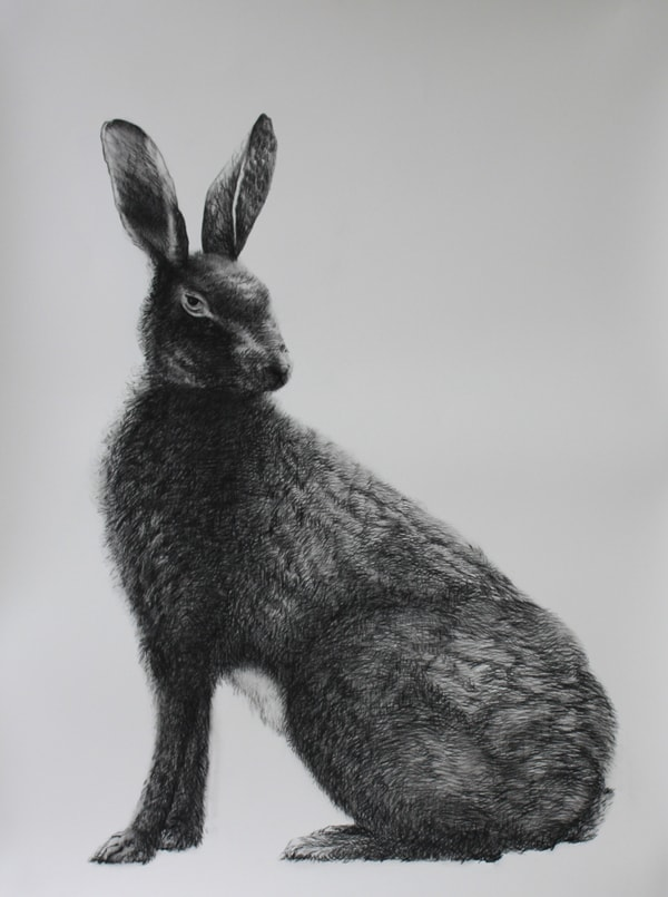 Adriane Strampp, Hare (In memory of Marcus), 2010, charcoal, pencil and graphite on Arches paper, 76x56cm