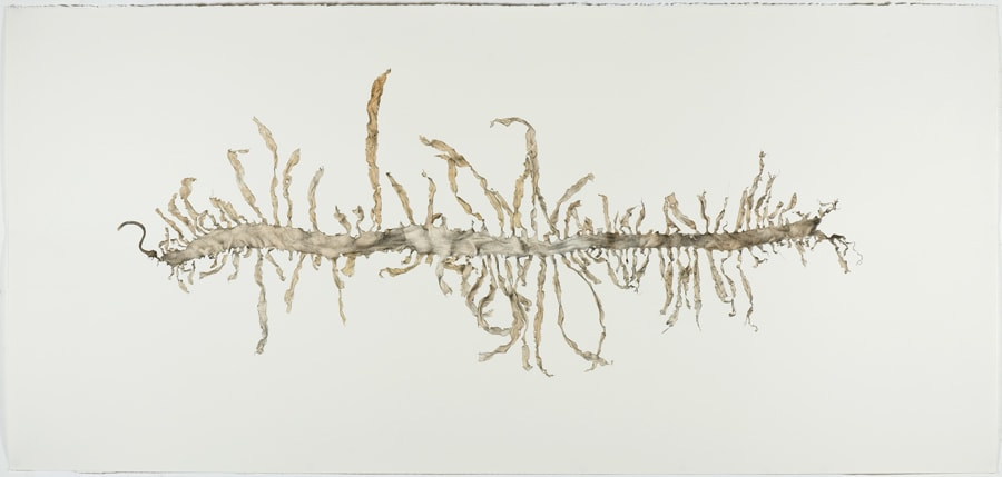 Andrew Seward, Seaweed, 2014, pencil and watercolour on paper, 100x195cm