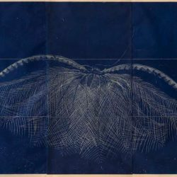 Martin King, Dawn Survey, Indigo, 2015, Etching, 90x134cm (editioned)