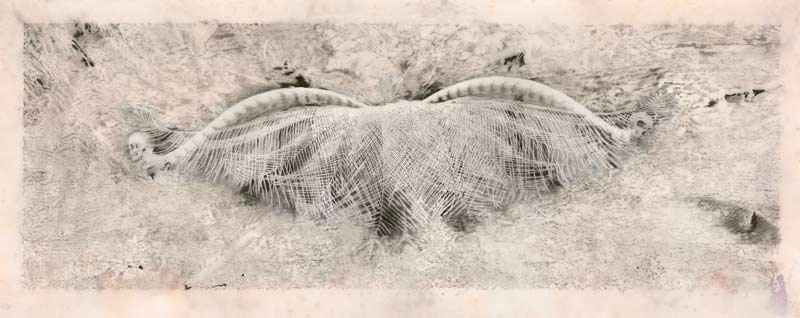 Martin King, Ghost Dance II, Graphite On Drafting Film, Pigment On Paper