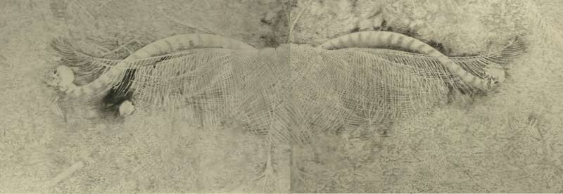 Martin King, Ghost Dance, graphite on drafting film, 56x159cm